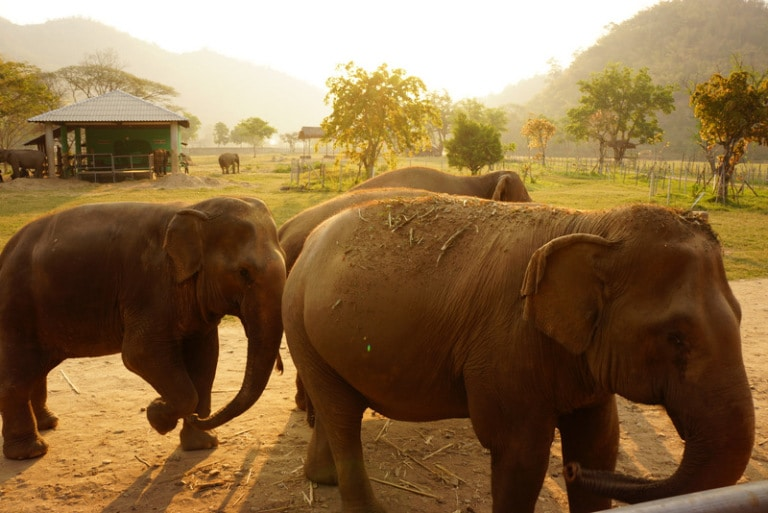 Volunteering at a street dog and elephant rescue sanctuary in Thailand